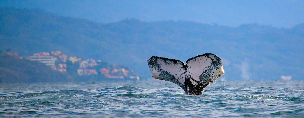 Whale-watching in Puerto Vallarta