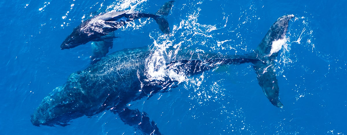 Whale-watching tours in Puerto Vallarta